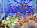 サンゴ・海水魚レイアウト