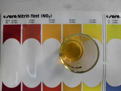 亜硝酸塩測定